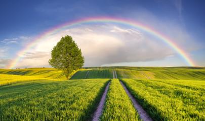 Fototapeta Tęcza nad wiosennym,zielonym polem