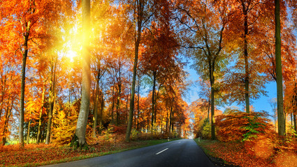 Autumn landscape with country road in orange tone. Nature backgr