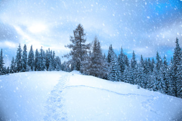 Winter mountain forest.