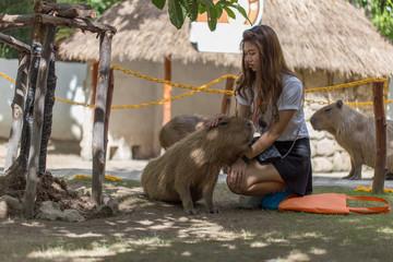 Asian girl touch with a Capybara
