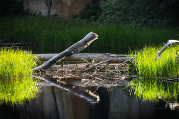 Yosemite Pond Reflection
