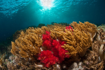 Fotoväggar - A coral sea scape, Indonesia