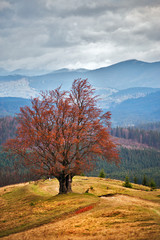 Lone tree in autumn mountains. Cloudy fall scene