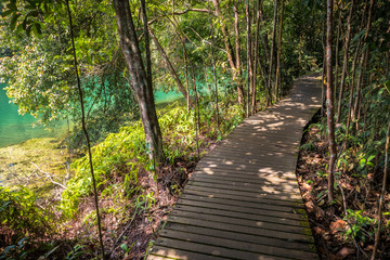 Emerald Pool Water and Jungle Hiking Path - Macritchie Reservoir Park, Singapore