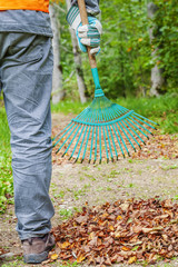 Man with rake near to the fall leaves in park