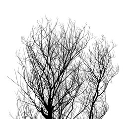 Tree Twigs Silhouette isolated on white
