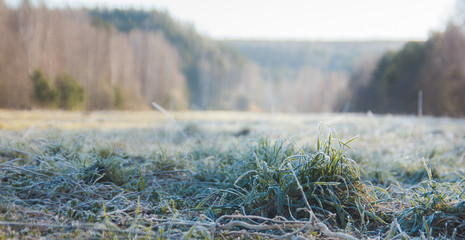 dew and frost on the grass in forest, morning in urals, landscape
