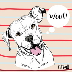 Vector close up portrait of pitbull. Hand drawn domestic pet dog illustration.