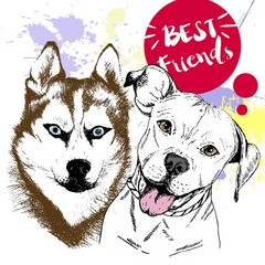 Vector hand drawn concept of siberian huskyr and pitbull frienship. Best friends.
