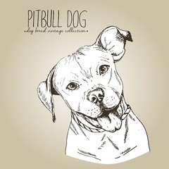 Vector close up portrait of english pitbull. Isolated on craft brown background.