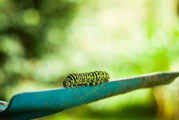 Caterpillar on shovel