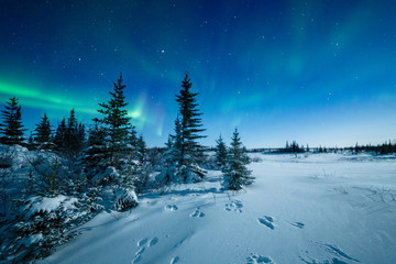 Fototapete - Snowshoe Hare Tracks And The Aurora Borealis