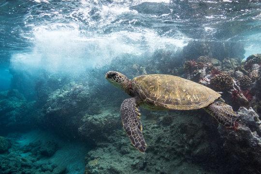 Wavebreak Turtle