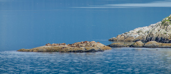 A colony of Steller sea lions bask in the sun on the rocks off South Marble Island in the main channel of Glacier Bay in Southwest Alaska.