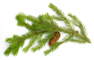 Pine branch with cones isolated on white background. Top view.
