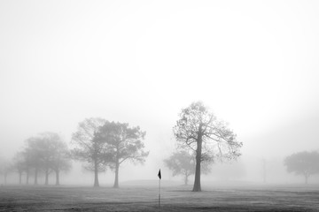 Foggy Morning at New Orleans City Park's Golf Course