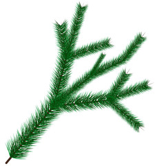 Vector illustration of green christmas tree branche