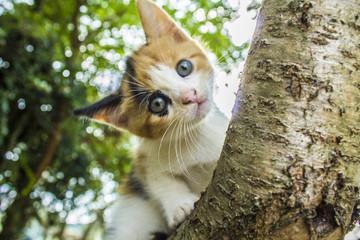 Kitten plays on a tree