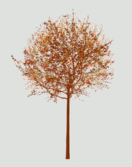 Small deciduous tree in the autumn