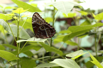 Colorful Butterfly sitting on a Leaf Close up 6