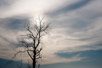 Silhouette of dried tree
