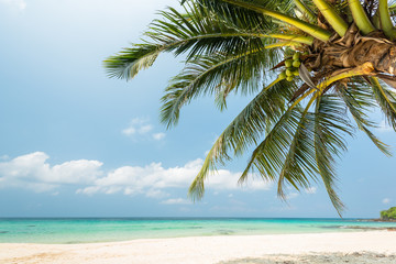 Wall Mural - Beautiful Exotic beach with coconut palm tree