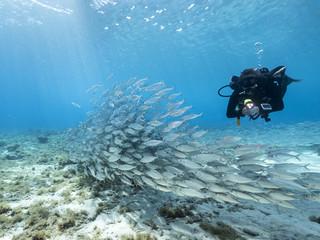Unterwasser - Riff - Fisch - Fischschwarm - Schwamm - Taucher - Tauchen - Curacao - Karibik - 4K