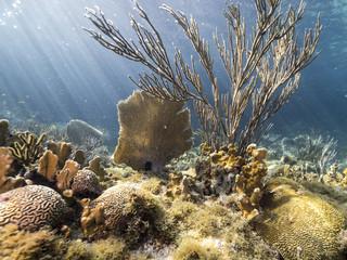 Unterwasser - Riff - Koralle - Gorgonie - Schwamm - Tauchen - Curacao - Karibik