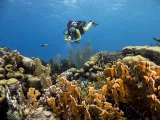 Unterwasser - Riff - Koralle - Schwamm - Taucher - Tauchen - Curacao - Karibik