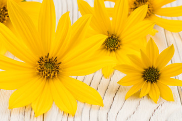Yellow wild flower on white old wooden table.
