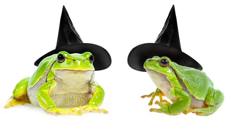 Fototapete - halloween frog  witch with a hat