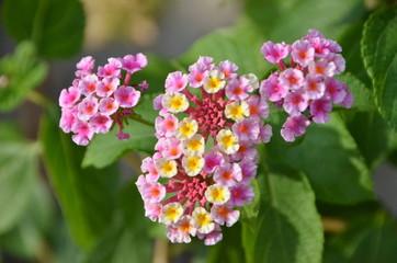 꽃 이미지