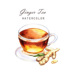 Hand-drawn watercolor illustration of the tea. Cup tea with ginger isolated on the white background.