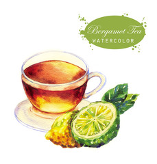 Hand-drawn watercolor illustration of the tea. Cup of the bergamot tea, bergamot sliced fruits and leaves isolated on the white background.
