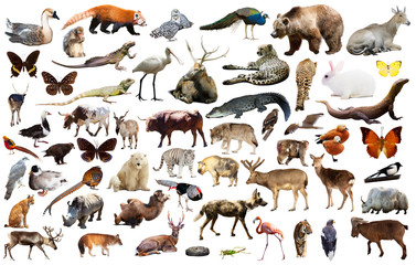 asia animals isolated Wall mural