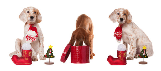 collection puppyes sits with christmas baubles and mittens, isolated white background