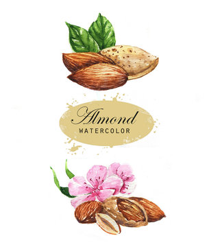 Hand-drawn watercolor illustration of watercolor nuts - almonds, leaves, and flowers. Isolated on the white background