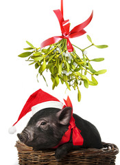 a cute little black pig with a red santa cap