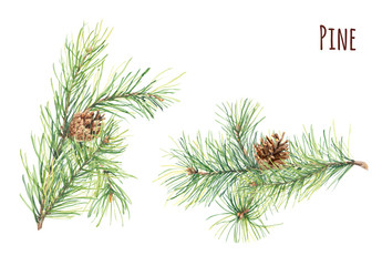 Collection of pine branches and cones on white background, hand draw watercolor painting, botanical illustration Christmas plants