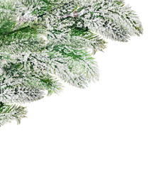corner from green pine tree branches in snow