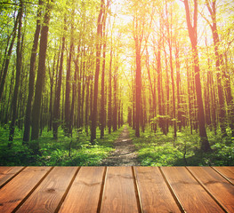 forest. Beauty nature background