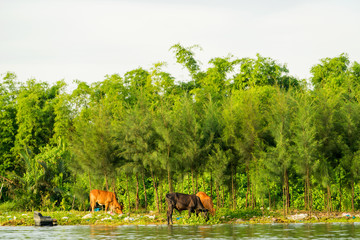 Houses along the Thu Bon river near Hoi An