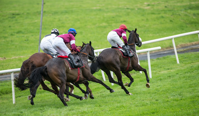 Race horses and jockeys competing for position on the track