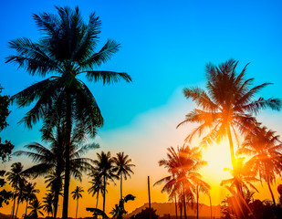 Coconut palms tree on blue and yellow sky background