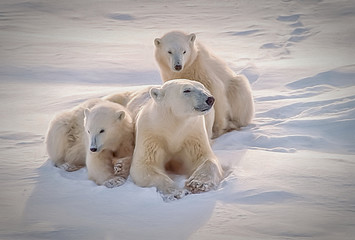 Polar bear with her cubs, oil painting