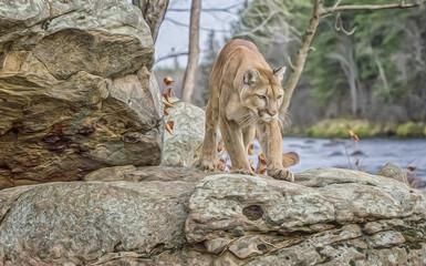 Cougar stalking,digital oil painting