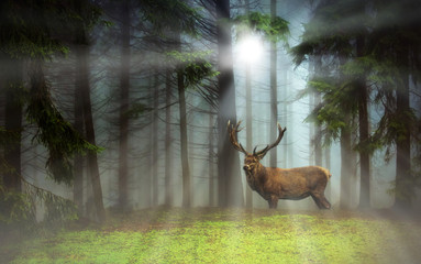 Photo sur Aluminium Cerf Hirsch im Nebelwald - Deer in a misty forest