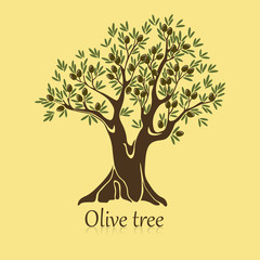 Ripe berries on branches of olive tree banner