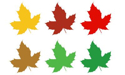 Sechs verschiedene Ahorn Blätter Auswahl für Herbst
