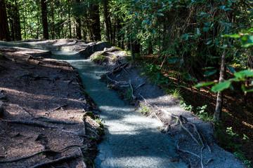 Cripple creek in the forest near Caumasee, Switzerland
